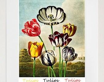 Tulips Botanical Art Print Home Decor (ZT349)