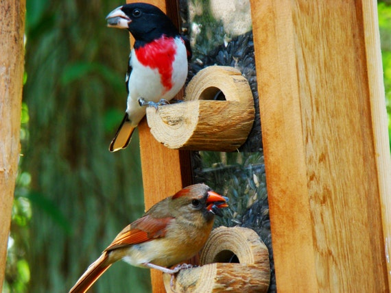 Bird feeder with beautiful unique new design handmade with for Unique homemade bird feeders