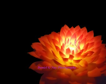Dahlia - Light Painted Flower 11x14