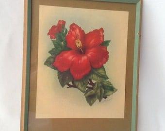 TED MUNDORFF Print Vintage 1947 Red Hibiscus