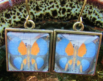 Butterfly Image Earrings Under Polished Glass Encased in a Brass Setting