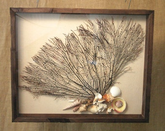 Preserved Natural Black Sea Fan in a Rustic Shadow Box