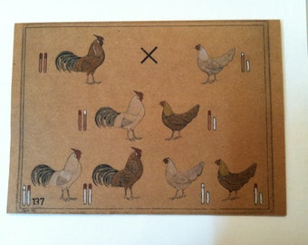 Chicken Genetic Chart Hand Painted Note Card