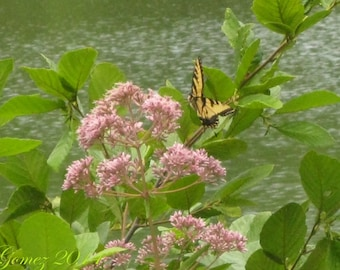 Take A Moment 1, photography, art, nature, butterfly, lake
