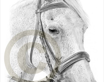 Horse pencil drawing print - A4 size - artwork signed by artist Gary Tymon - Ltd Ed 50 prints only - pencil portrait