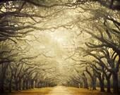 "Rustic Landscape Photography, Tree Art, Fine Art Photography, Savannah Georgia, Rustic Nature Tree Print, Landscape Print ""Cathedral"""