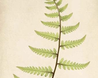 Botanical Print, Fern Art, Rustic Photography, Woodland, Forest, Nature Photography, Botanical Art, Wall Art, Fine Art Print, Nature Art
