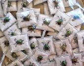 Real Tiny Metallic Green Beetles, Chrysochus auratus, 5 pack