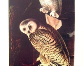 Snowy Owl, Blue Grosbeak -12 x 9 - 1942 Vintage Book Page