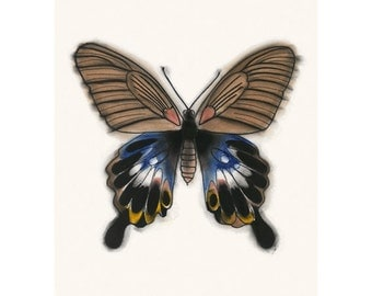 "Butterfly art drawing : The Great Morman butterfly Papilio Memnon  8.3"" X 11.7"" print - 4 for 3 SALE"