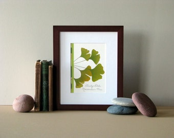 """Pressed flower print, 8"""" x 10"""" matted, Ginkgo leaves, green leaf, pressed leaves, Ginkgo wall art, no. 018"""