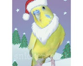 Holiday Parakeet Greeting Card