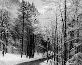 Snowy Winter Road Black & White Photography  - Landscape Print - Snow Scene -  Decor -Winter Trees - New England - Dirt Road Winter Drive