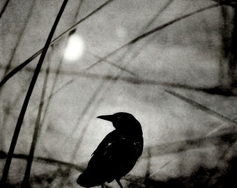 Crow Photograph Black and White Raven, Black Bird, Light Orb, Moody Crow Scene wall art 8x8