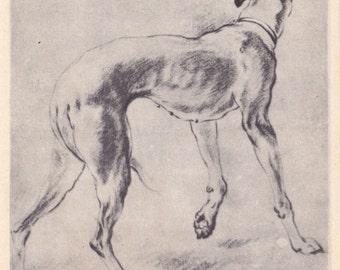 "F. Snyders ""Greyhound"" Postcard -- 1959"