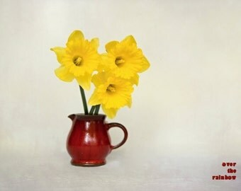 Daffodil art, Nature photography, 3 Yellow Daffodils, Red Pitcher, Flower print, Shabby chic home, Floral still life, French country home