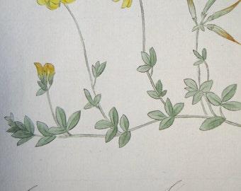 1850 Original Botanical Watercolor - Lotus Flower Plant #133 by K. G. A. Winkler