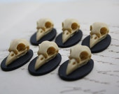 Bird Skull Raven Skull Crow Skull Resin Cameo Cabs Cabochon Taxidermy Animal Cameo Steampunk Gothic Goth Skull Black Ivory 25x18mm 6 PIECES