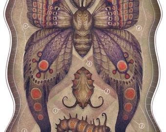 Entomology Tab. VI - A4 art print