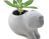 Cute concrete capybara planter/ vase for succulent plants - gray