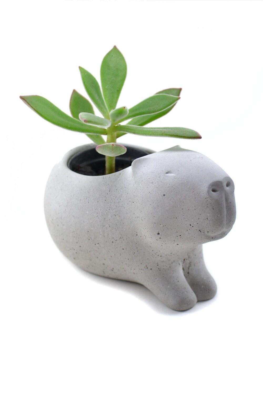 Cute Concrete Capybara Planter Vase For Succulent By