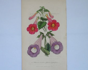 Antique Victorian Botanical Print