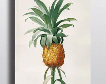 Antique Pineapple Botanical Illustration Art Print Poster Wall Decor Design Home Decor Beach Decor Summer Colorful Print Large Minimalistic