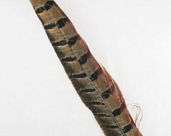 "6, Pheasant Feathers, 10-15"", Ringneck Pheasant, per 6 pieces - PTRS6"