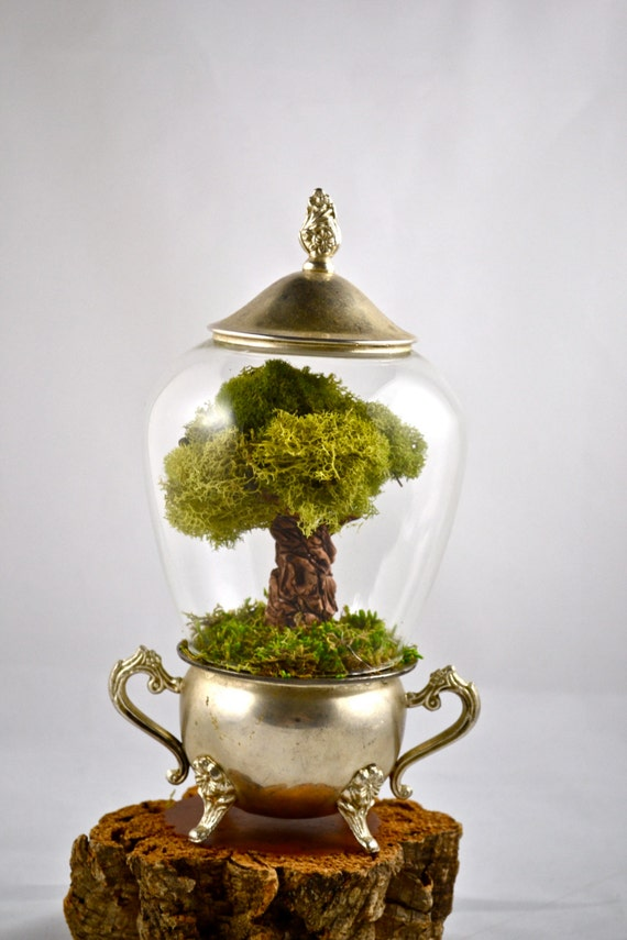 arbre terrarium mousse arbre terrarium miniature main sculpt e. Black Bedroom Furniture Sets. Home Design Ideas