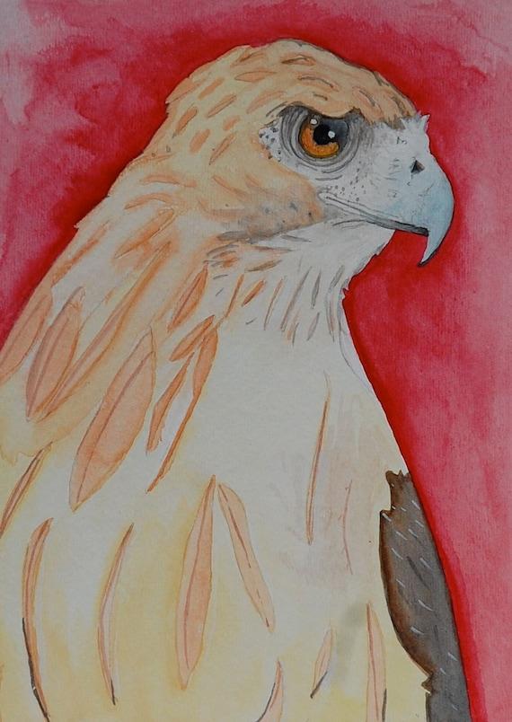 Hawk painting watercolor - photo#51