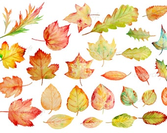 Hand painted watercolor autumn leaves fall leaves digital clipart instant download for greeting cards wall decor