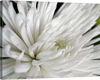 White Photo Canvas, Spider Mum Flower, Macro Photography, Nature Flower Canvas, Canvas Wall Art, Ready to Hang, Neutral Colors, Nursery Art