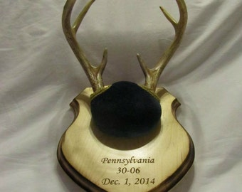Custom Engraved Taxidermy Antler Mounting Plaque - Shield