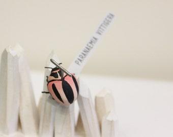 Striped Lady Beetle