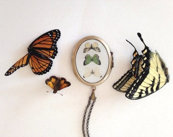 Butterfly Trio Locket - Yellow and Green Wings Vintage Illustration - Naturalist Necklace