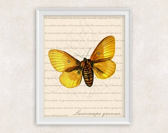Yellow Moth Art Print - Oak Egger Moth - Butterfly - Wall Art - Home Decor - Office Art - 8x10 - Item #106