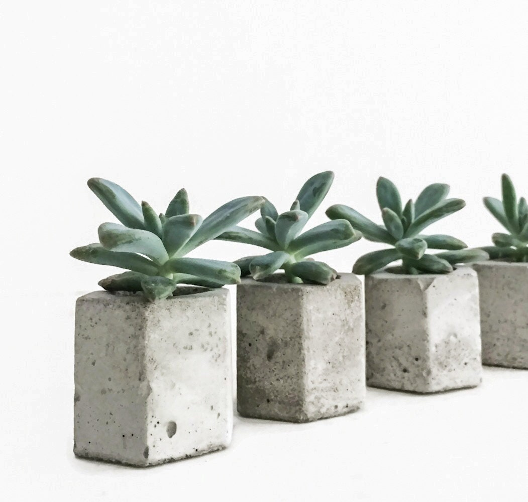 Set Of 5 Concrete Hex Micro Planters Succulent Planter