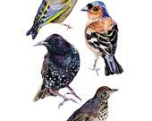 British Garden Birds Print in Watercolor