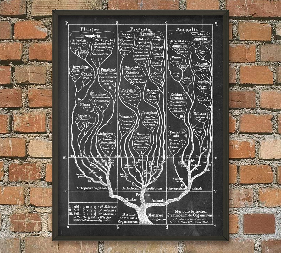 Tree of Life Wall Art Poster 2 Evolution Science Print