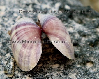 Clam shell Picture