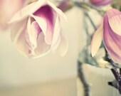 Pink Magnolias, Spring Magnolias Vase, 8x8 Photo, Bokeh, Modern Wall Decor, Home Decor, Fine Art Phtography