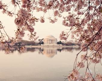 Fine Art Photo, Cherry Blossom Art, Pink, Washington DC Photo, Spring, Flower Art, Jefferson Memorial Monument, Travel Art, Square Art