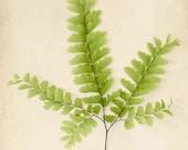 Botanical Print, Fern Art, Nature Photography, Woodland Art, Room Decor, Fern Print, Botanical Wall Art Print
