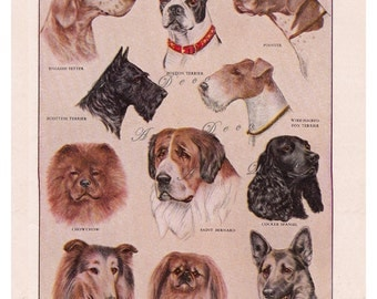 vintage printable dog breeds, a page from a 1950's dictionary, digital image no.  287