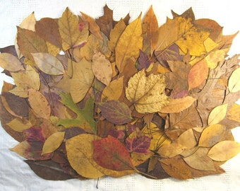 Real Pressed Fall Leaves, 150 Gold Red Brown Dried Leaves, Table Decor, Fall Wedding Supply DIY Table Numbers, Autumn Rustic Craft Supples