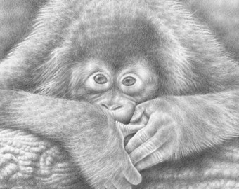 7x5 Giclee Print of a Baby Orangutan, Wall Art, Animal Art Gift, Black and White Picture