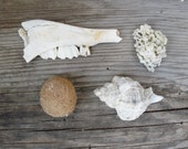 Curio Collection Teeth Seaweed Seashell Beach Findings