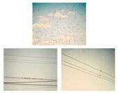 Set of 3 bird photos, Pale blue, slate grey, birds, flock, cloud photos, sky photos, shabby chic decor, bird wall art 4x6, 5x7, 8x10, 11x14