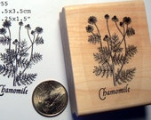 Chamomile rubber stamp WM P55