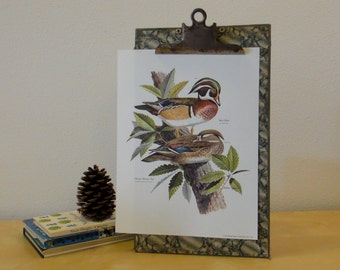 Vintage Arthur Singer Bird Print - Wood Duck and Oak